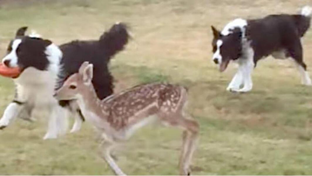 DeerLeg