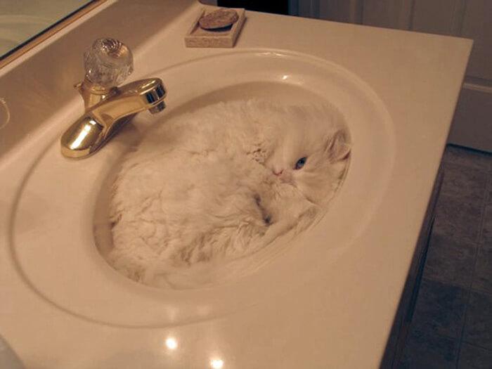 cat-sleeping-sink-21422-15949.jpg
