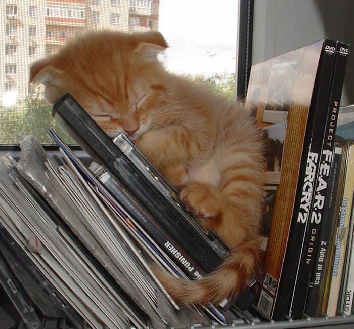 kitty-sleeping-dvds-21413-70474.jpg