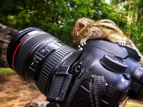 squirrel-on-camera-21421-27899.jpg