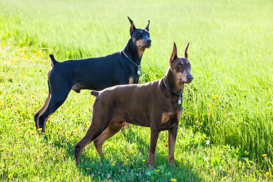 dog-and-grandog-59940-73642