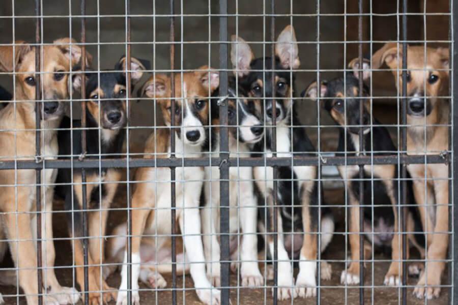 dog-kennel-78144-45927