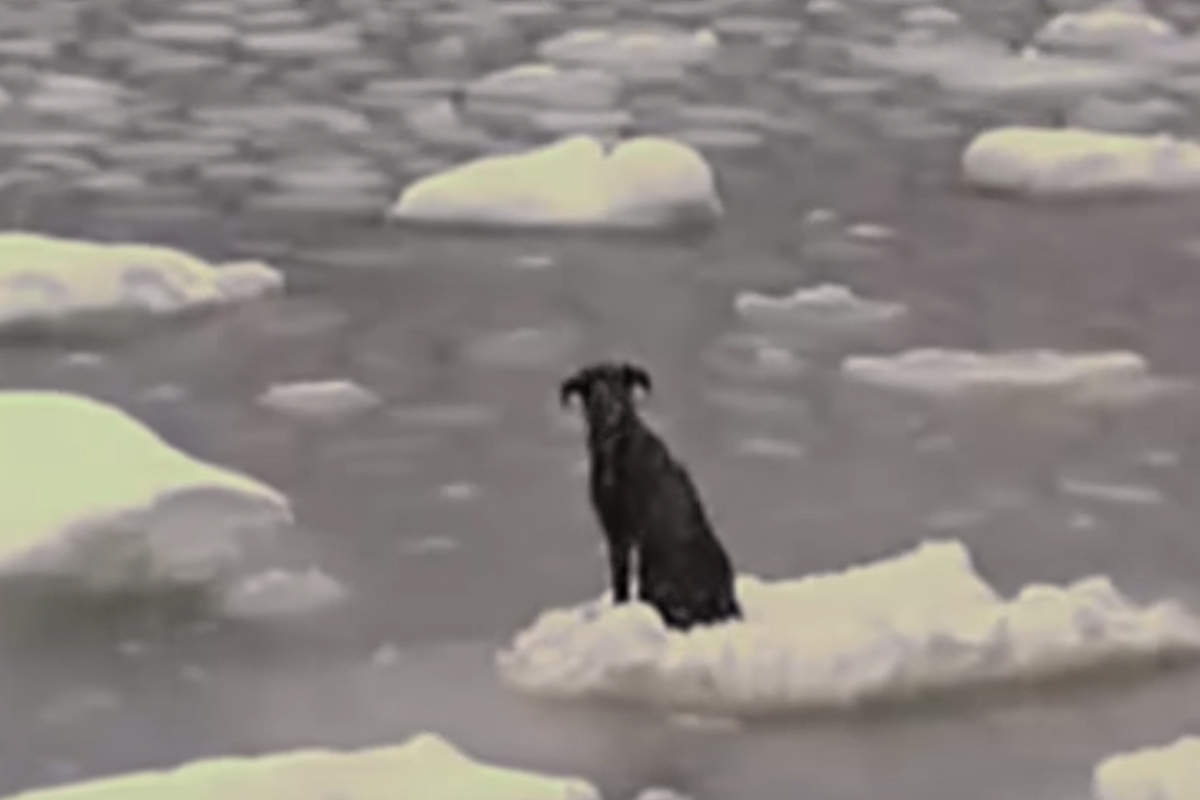 dog russian ice no rescue