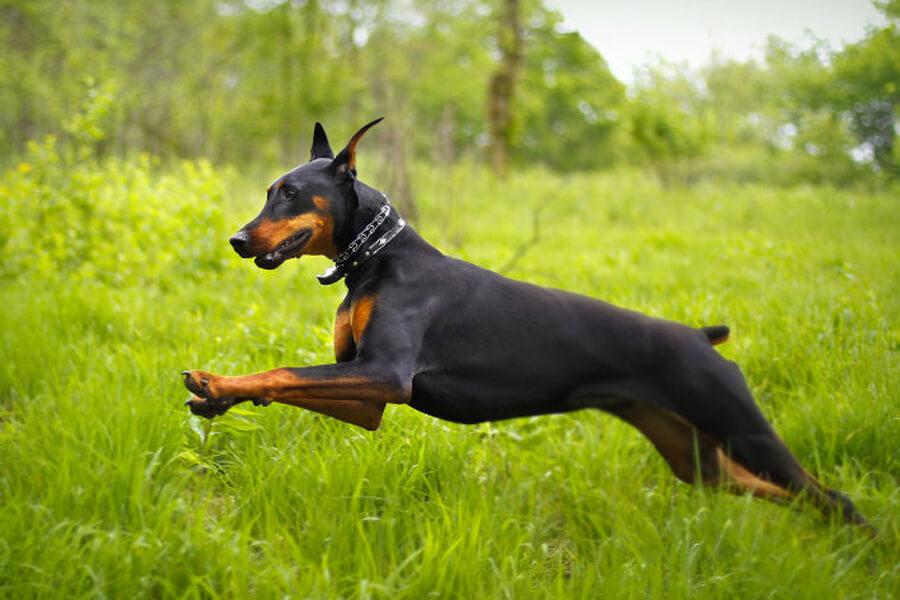 proud-dog-42402-31178