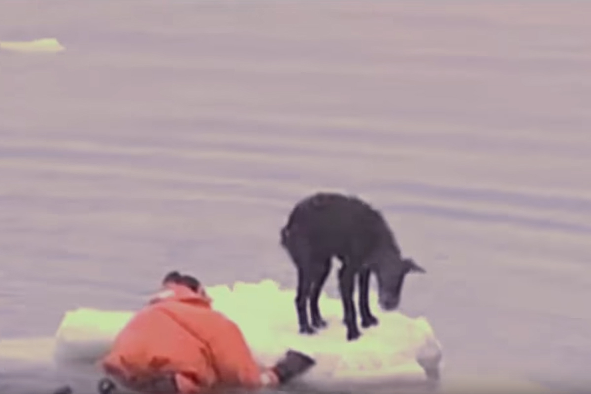 russian sailor meets dog on ice