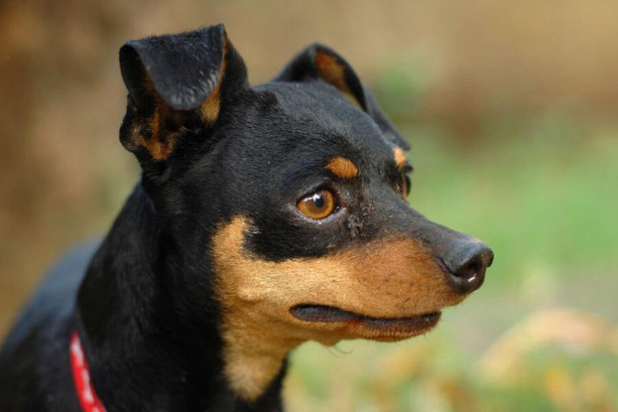 sad-dog-27980-54202