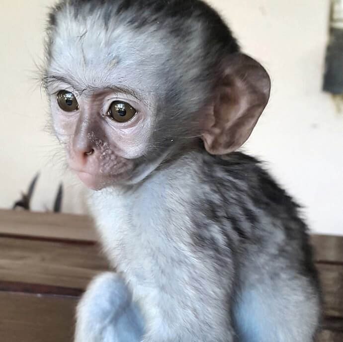 1-orphaned-baby-monkey-makes-unlikely-friends-horace-31907-15767
