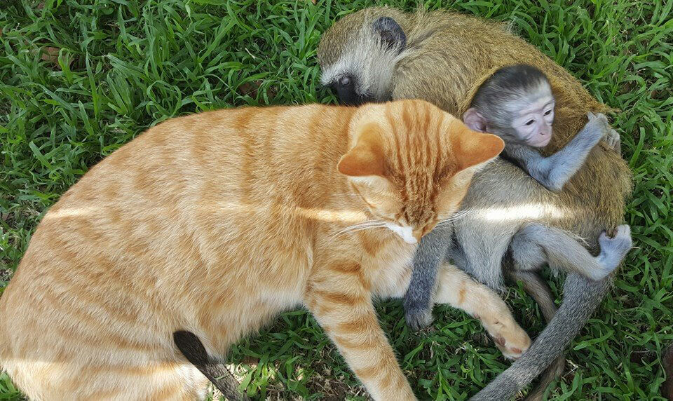 20-orphaned-baby-monkey-makes-unlikely-friends-horace-94086-41474