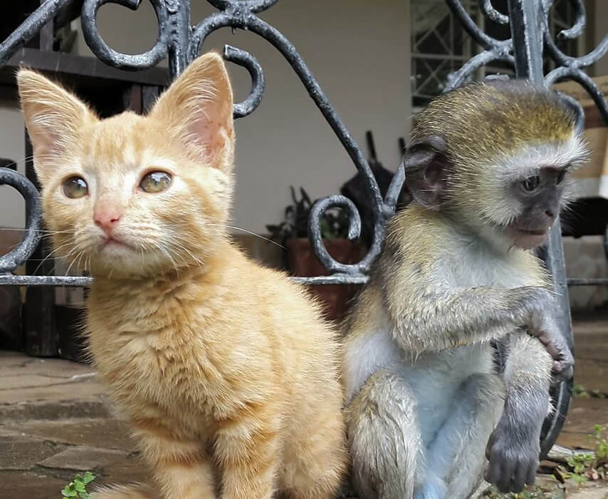 4-orphaned-baby-monkey-makes-unlikely-friends-horace-71269-11615