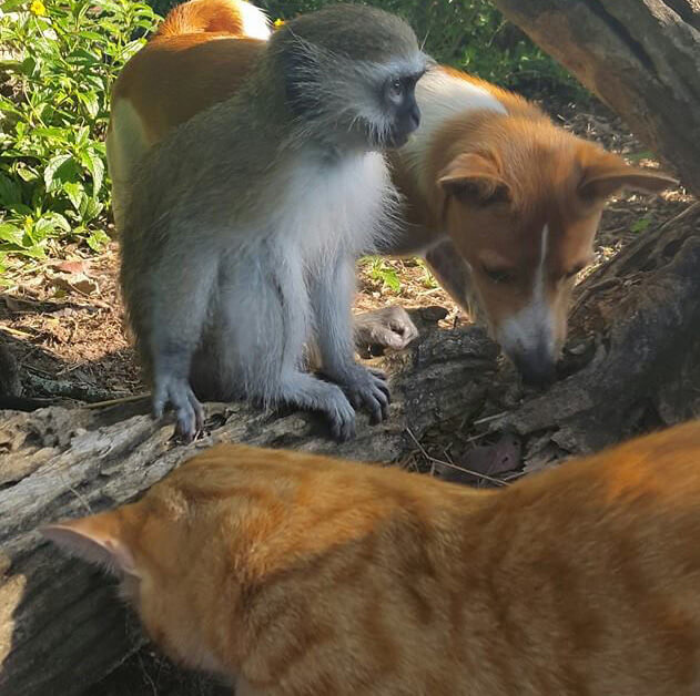 6-orphaned-baby-monkey-makes-unlikely-friends-horace-13076-32012