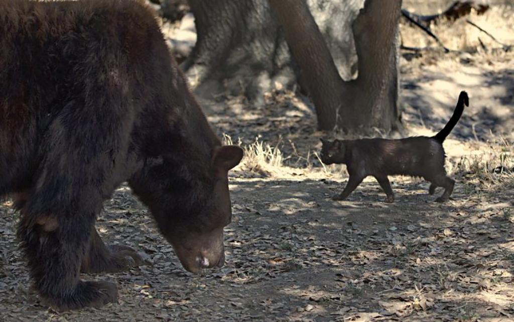 Little Bear Acted Like A Big Bear
