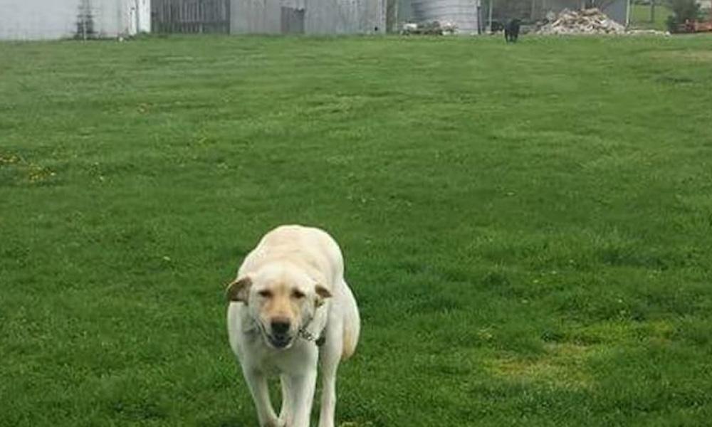 dew te dog lives on a farm lost dog mystery