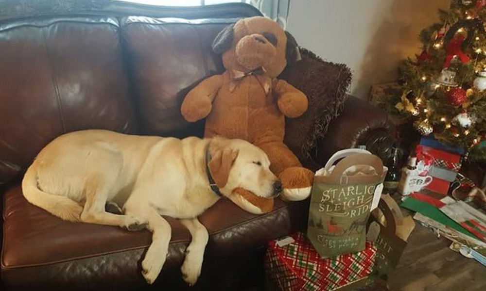 dew teh dog loves sleeping Lost Dog mystery