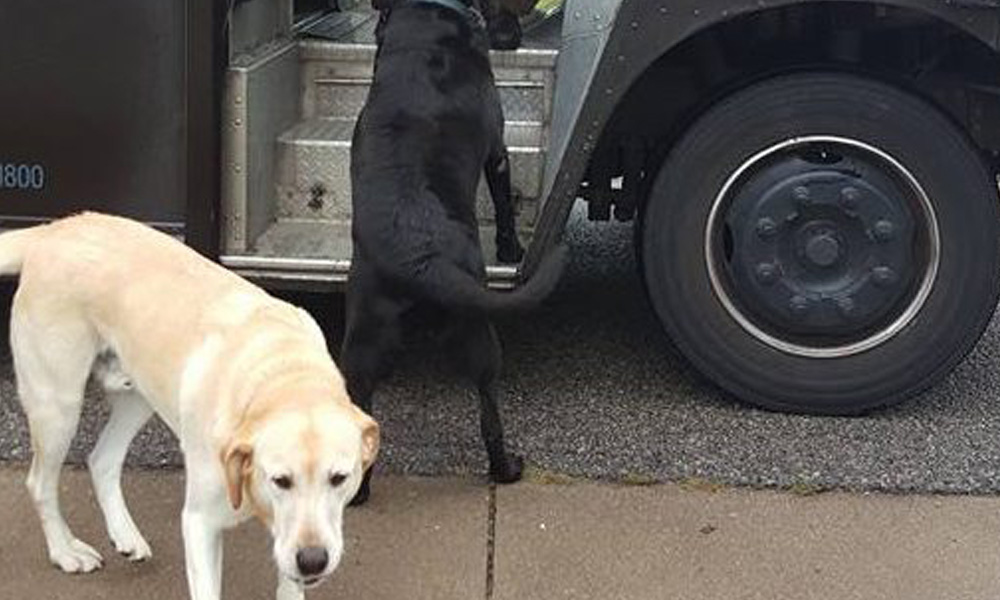 dew the dog had a home lost dog mystery