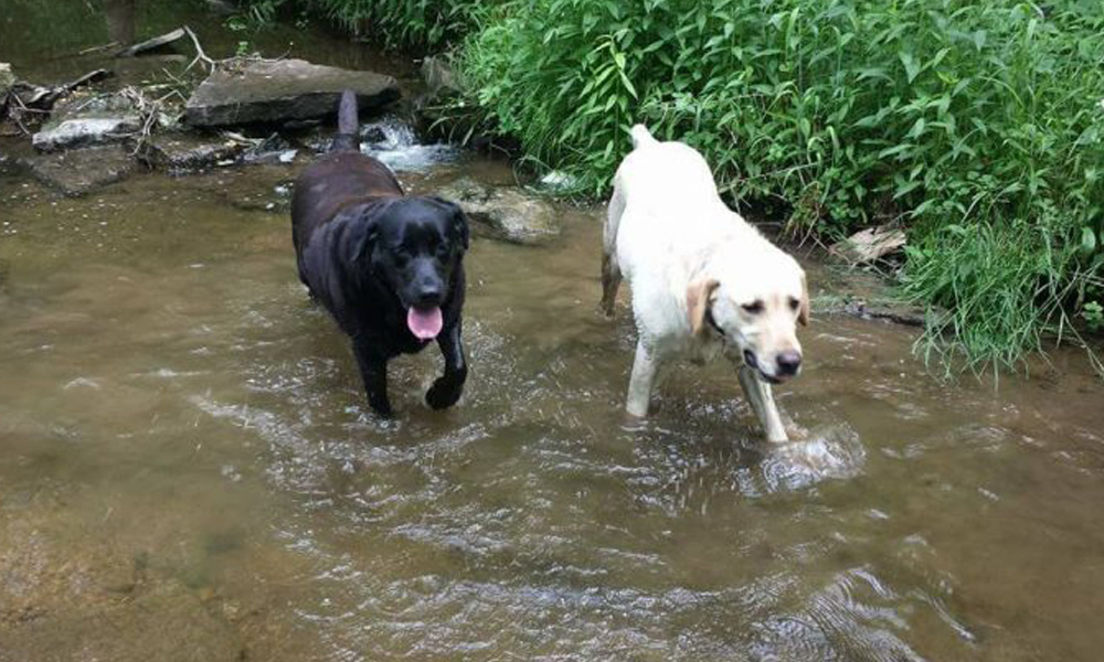 dews and lily brothers and sister lost dog mystery