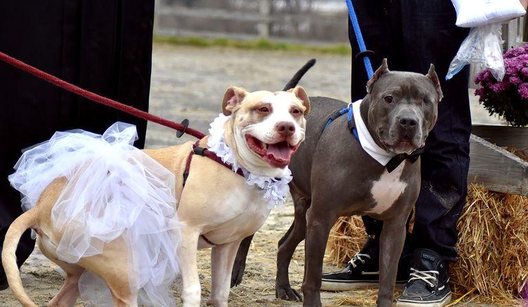dog-wedding-768w