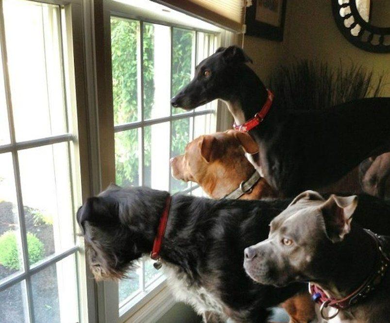 dog-window.v1-e1551738314962