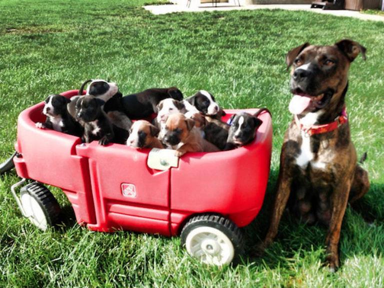 puppy-wagon.v1-768w