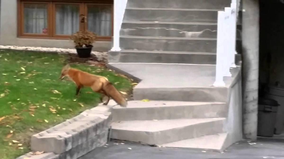 fox-neighborhood