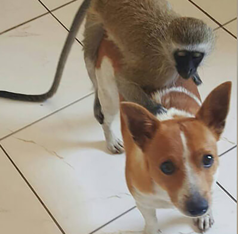 13-orphaned-baby-monkey-makes-unlikely-friends-horace-57327-19271-97176