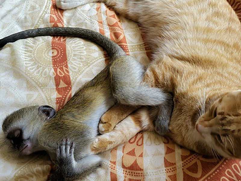 16-orphaned-baby-monkey-makes-unlikely-friends-horace-97236-66027-22419