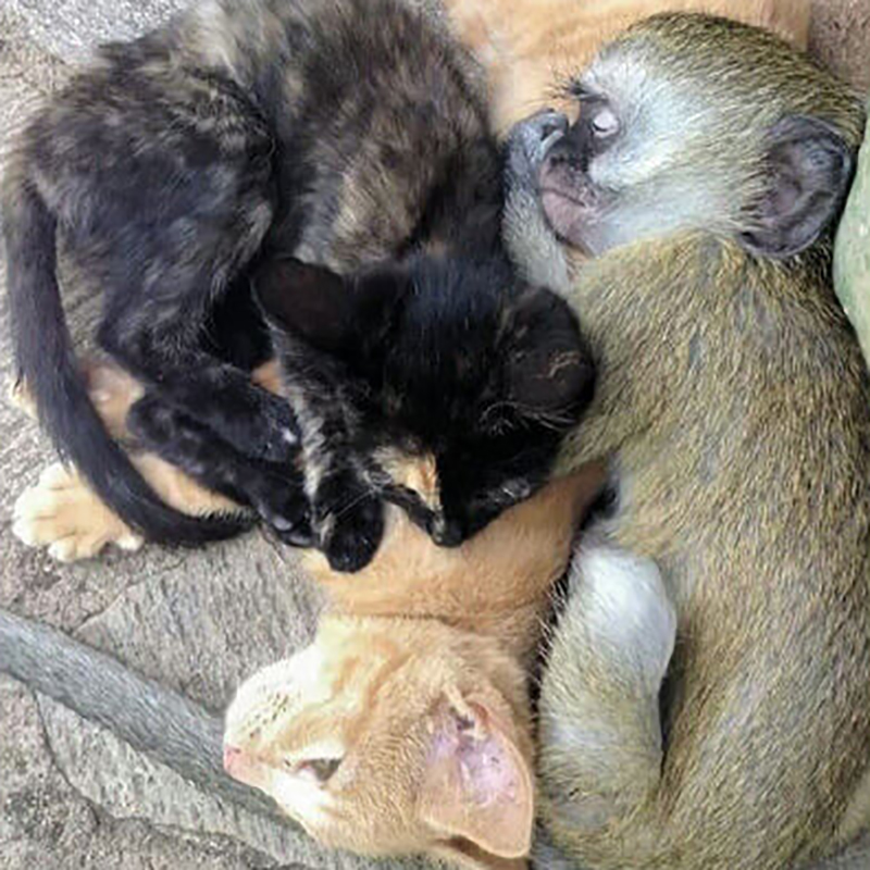 5-orphaned-baby-monkey-makes-unlikely-friends-horace-57560-28601-41388