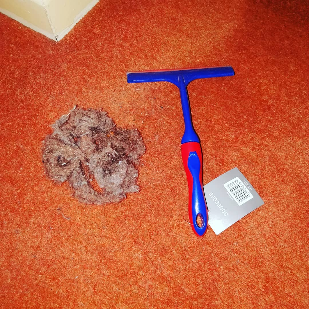use a squeegee to get pet hair out of carpet hack