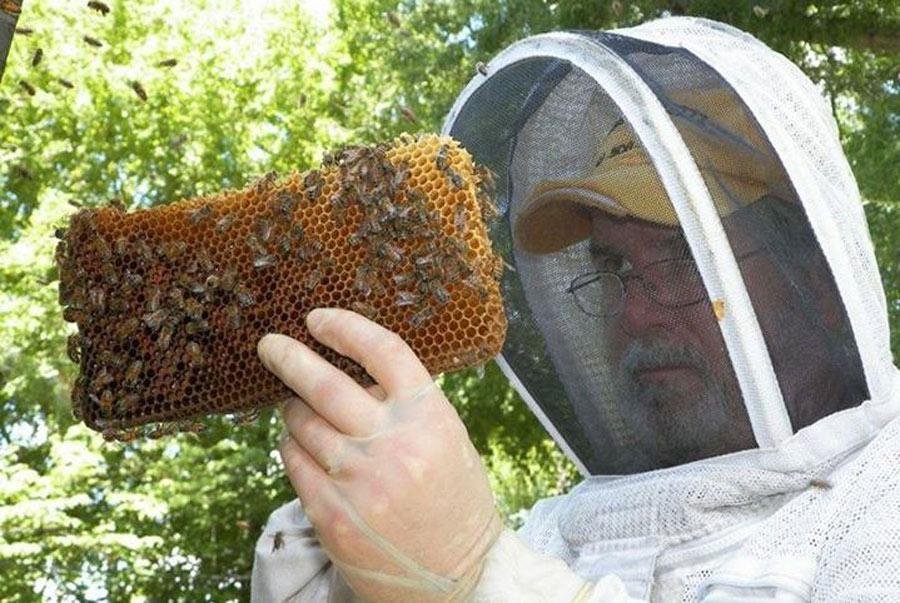 David-with-Honeycomb-e1538667541270-58999