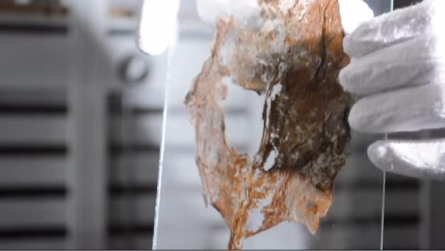 Tobacco from the shipwreck Kronan