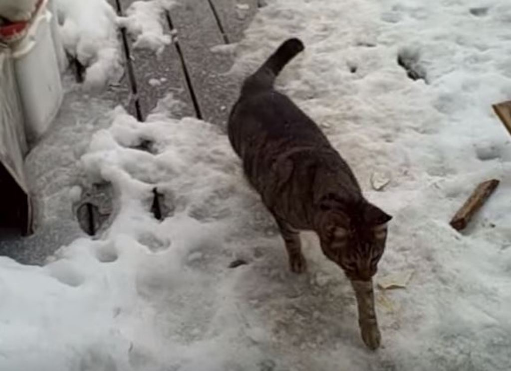 cat on deck in snow
