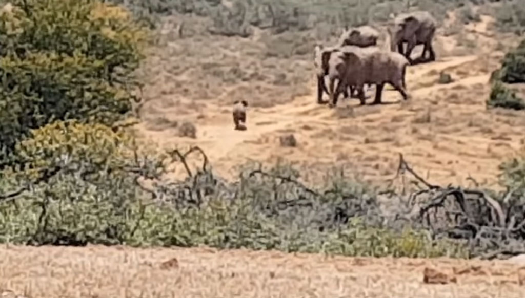 baby-elephant-reunited-with-family-49634