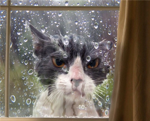 dramatic cat locked out in rain