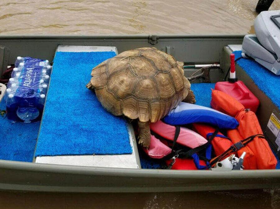 tortoise-35222