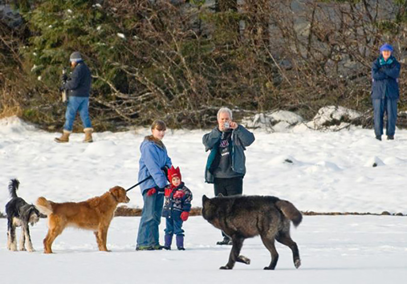 wolf-meets-dog-2-47549