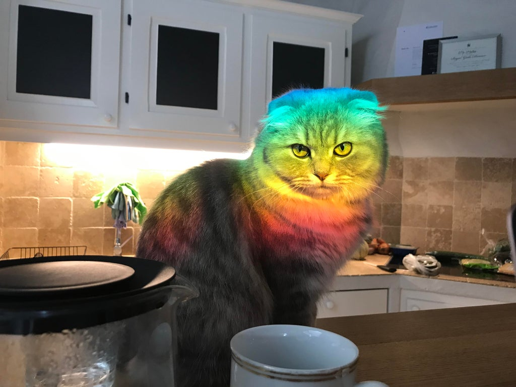 Cat with rainbow over its face