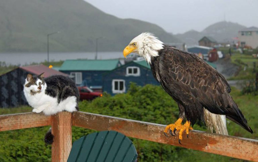 cat and eagle on deck