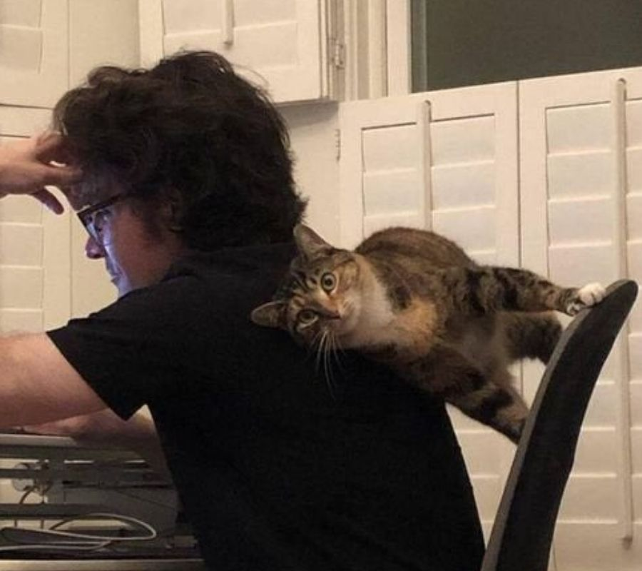 cat leaning on their human