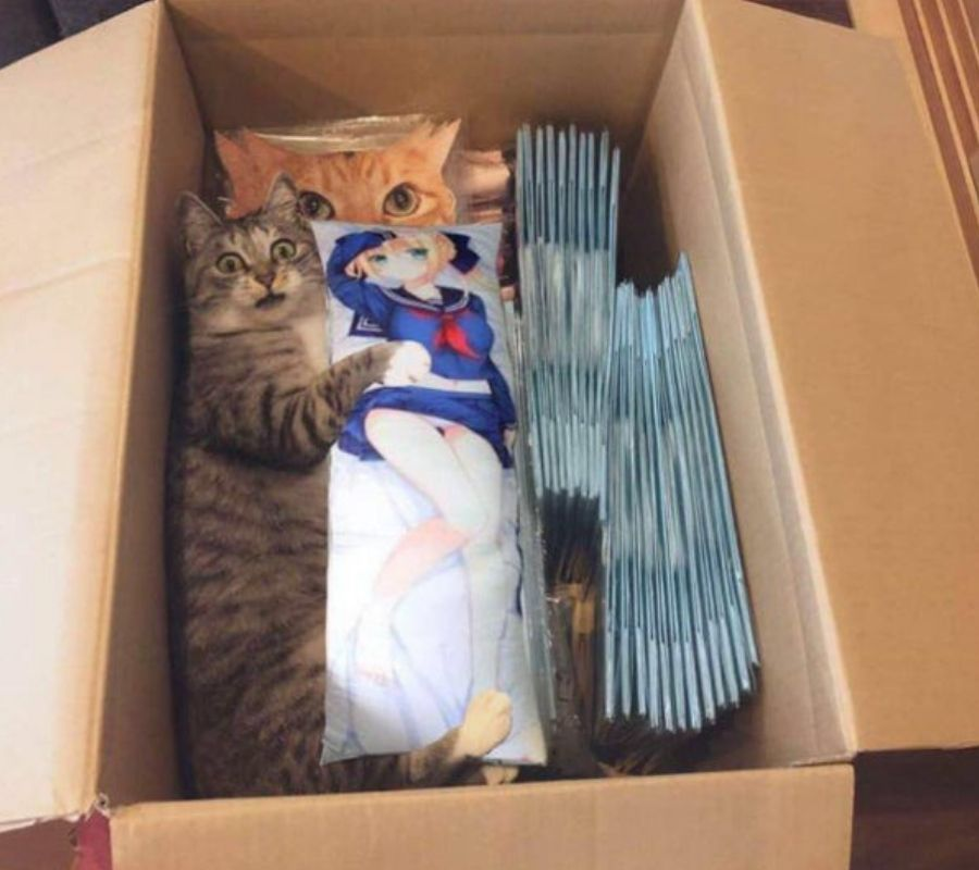 cat special delivery hug in a box