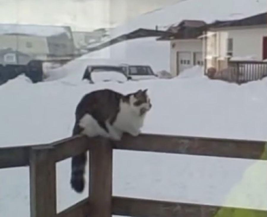 fluffy cat alaska