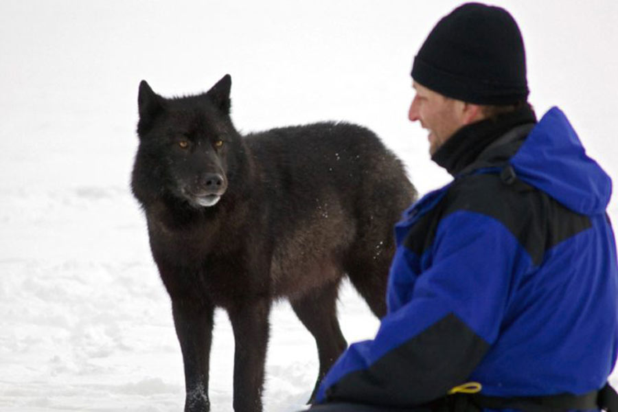 wolf and nick in snow