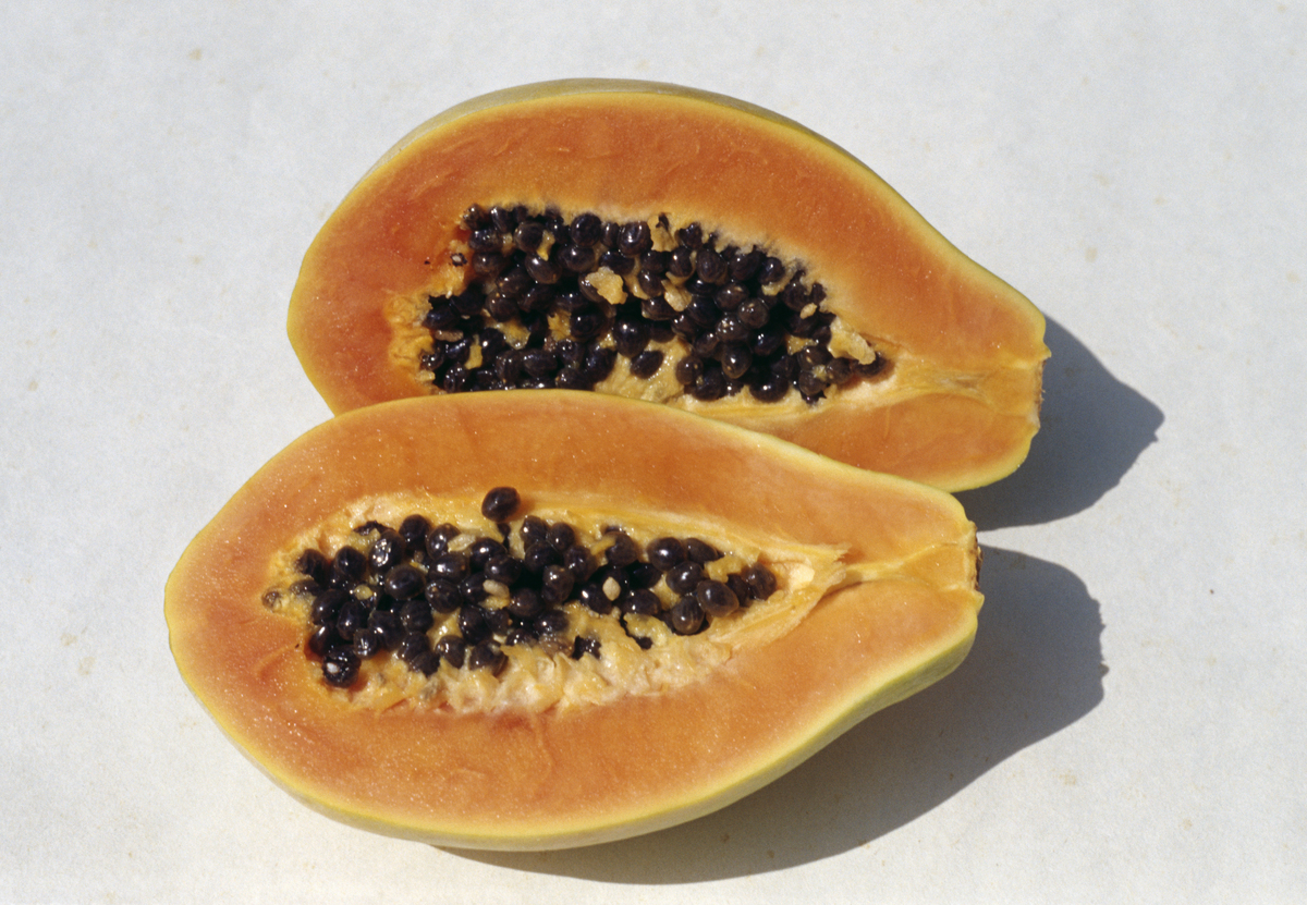 Papaya or Papaw (Carica papaya), cut in cross-section, Caricaceae.