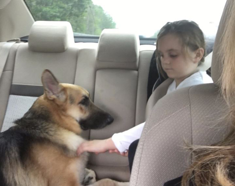 Molly DeLuca and Haus the German shepherd in a car