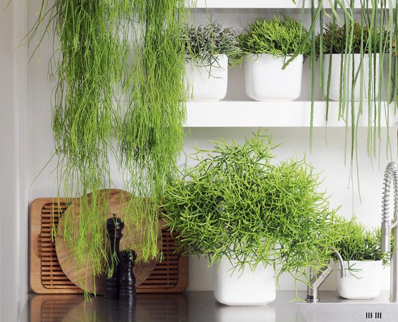 a bunch of plants on kitchen shelves