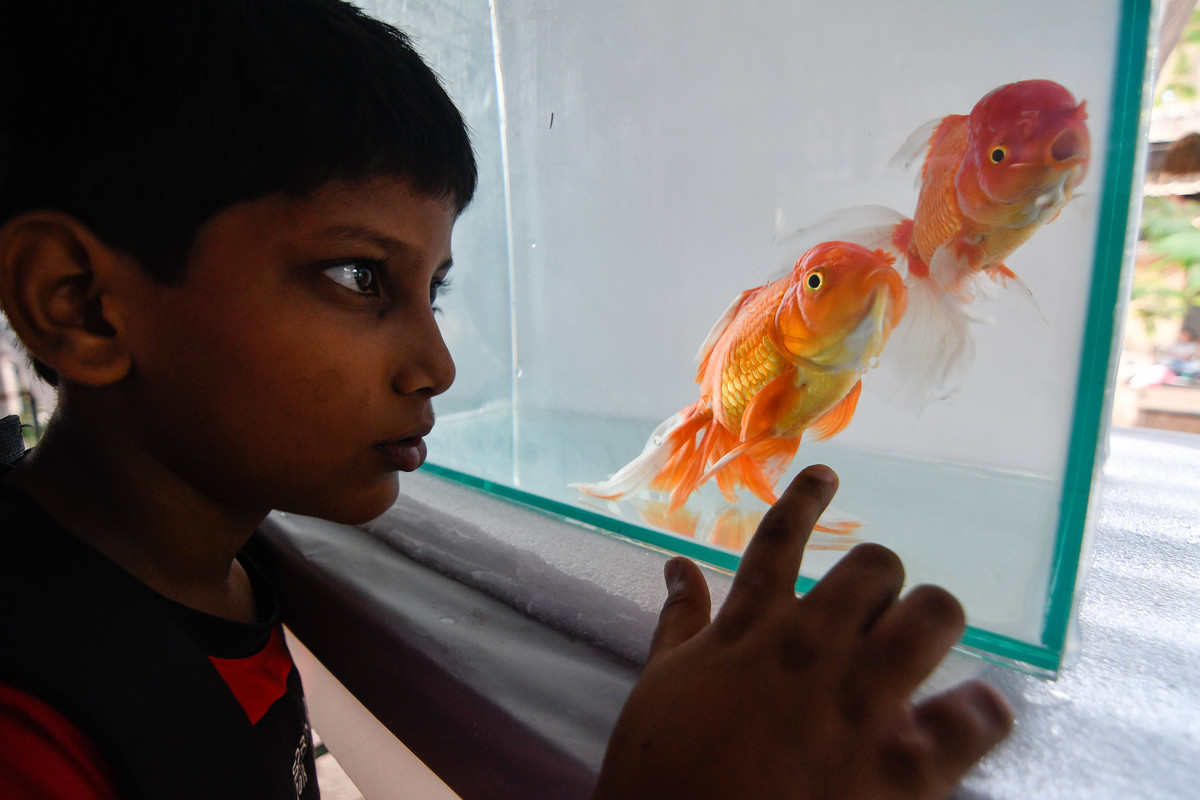 400 rare species of fishes, along with 140 fish tank for display as a part of exhibition at Bhavans Natural and Adventures centre