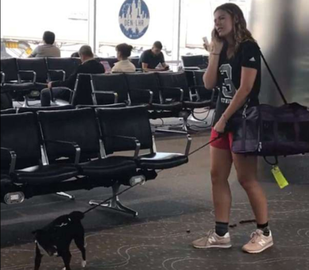 dog-poos-right-in-airport-36897