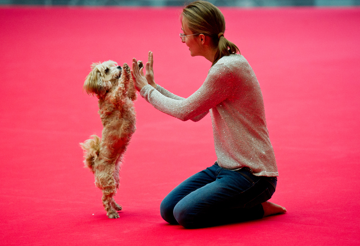 The Havanese dog Paula gives her owner a high-five.