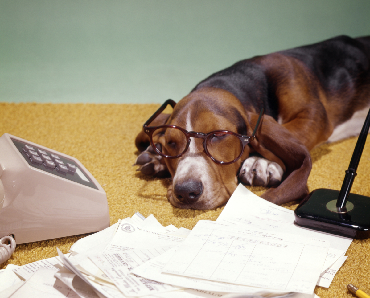 A Basset Hound with glasses lazily sleeps near papers and a phone.