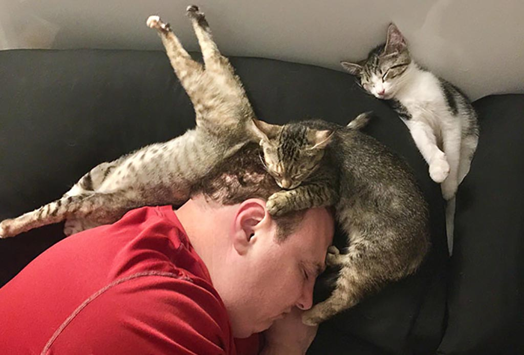 Three cats sleeping with owner