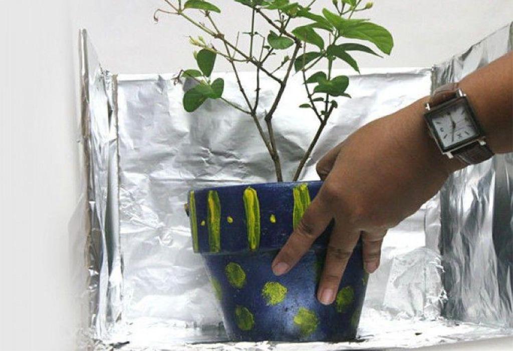 Plant surrounded by aluminum foil