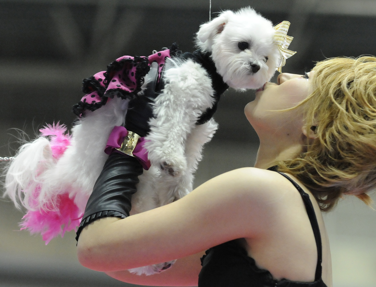 An owner kisses her maltese dog as she takes part in a 'Tokyo Dogs Collection' fashion event.